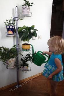 Цветы на стене,поливать цветы, маленькая помошница