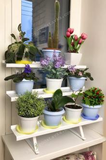 Цветы на окне, разместить цветы на окне, декор, полочка для цветов, настенная полочка