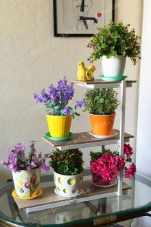 цветы на окне купить подставку тел. (098) 300 11 00