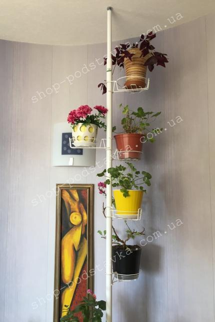 комнатные цветы на подставке фото тел. (098) 300 11 00