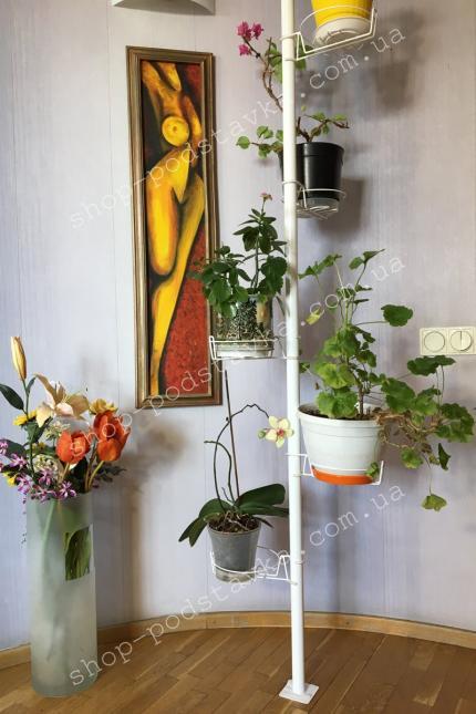 Цветы на подставке фото тел. (098) 300 11 00